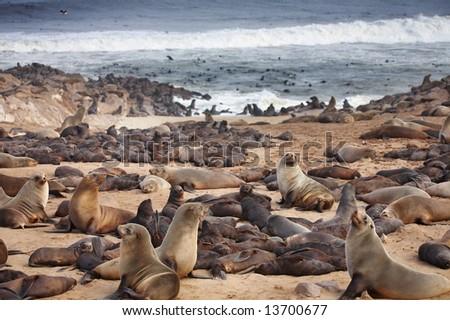 Atlantic seals - stock photo