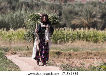 ATLAS MOUNTAIN, MOROCCO - OCTOBER 11: Unidentified woman carrying grass in Atlas Mountain on October 09, 2013 in Morocco. Only portion of population lives countryside. - stock photo