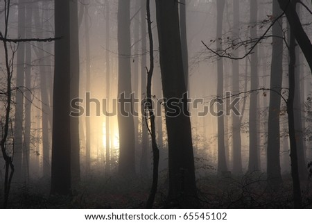 Atmospheric, even spooky, close crop soft focus image of woodland with sun trying to pierce the early morning mist. - stock photo