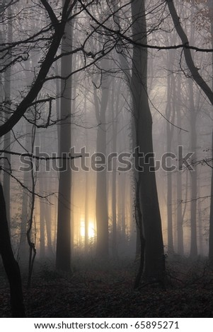 Atmospheric spooky close crop soft focus image of woodland with sun trying to pierce the early morning mist. - stock photo