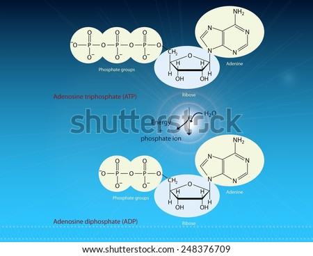 ATP and energy production - stock photo