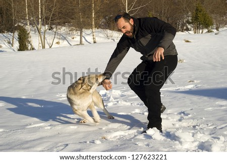 Attack dog - stock photo
