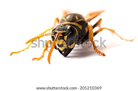 Attack single wasp with mandibles on white background - stock photo