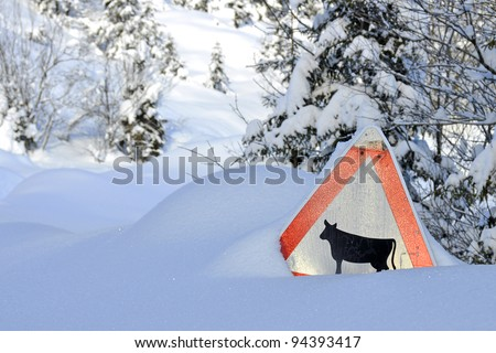 Attention cow trail in winter scenery - stock photo