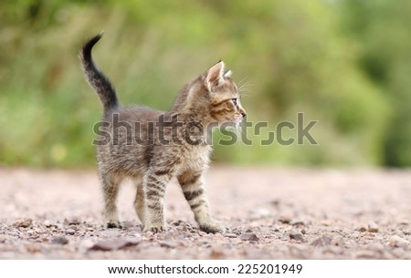 Attentive kitty - stock photo