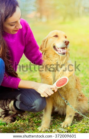 attractive girl comb dog, golden retriever, nature