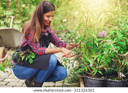 Attractive pretty young female nursery worker bending down pruning a potted plant in the greenhouse preparing it for sale at the shop - stock photo