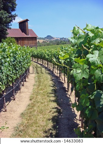 Attractive Vineyard in Northern California's Wine Country, vertical view - stock photo