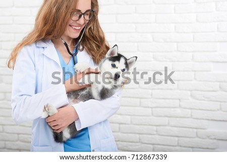 Attractive young woman professional veterinarian smiling cheerfully holding adorable little husky puppy copyspace.
