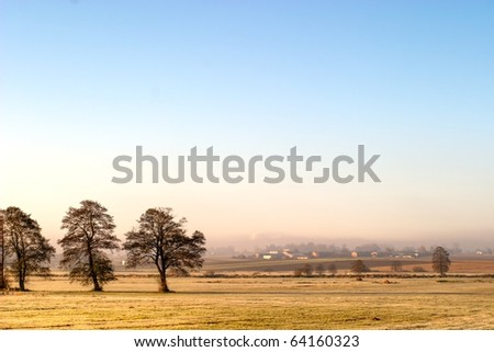 atumn landscape of young grey forest with bright blue sky - stock photo