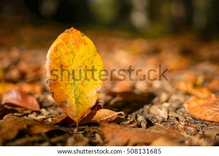 Atumn leaf in the forest