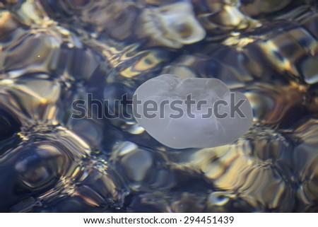 Aurelia aurita, moon jellyfish floats on the surface of the sea water. - stock photo