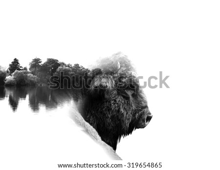 auroch in low key monochrome portrait. Double exposure effect - stock photo