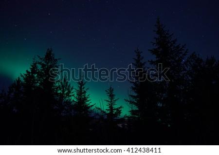 aurora borealis northern light on winter night sky over trees - stock photo