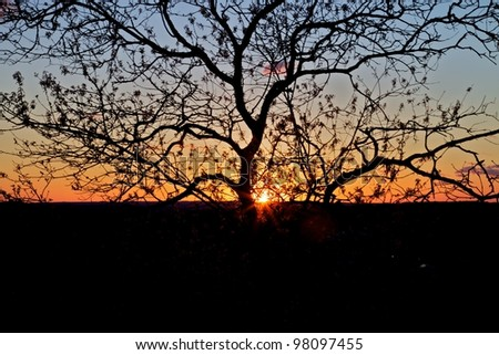 Austin Sunset - stock photo