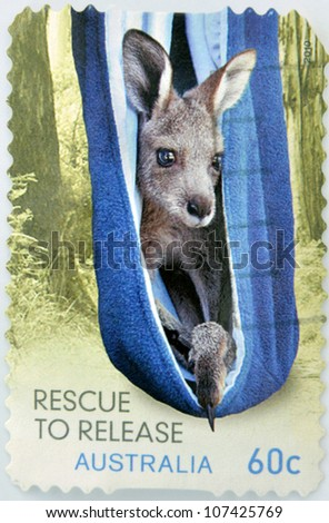 AUSTRALIA - CIRCA 2010: A stamp printed in Australia, shows kangaroo rescued stuck in a towel inside the bag like his mother, circa 2010 - stock photo