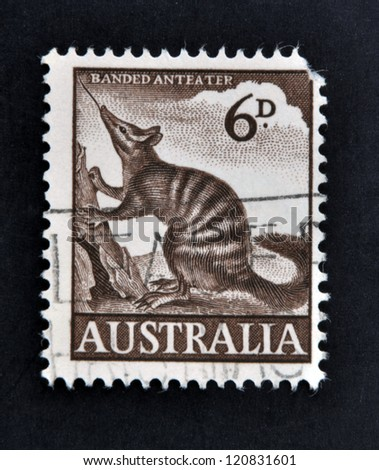 AUSTRALIA - CIRCA 1960: A stamp printed in Australia shows numbat, Banded Anteater, circa 1960 - stock photo