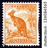 AUSTRALIA - CIRCA 1942: a stamp printed in the Australia shows Kangaroo, Macropodidae, Australian Wildlife, circa 1942 - stock photo