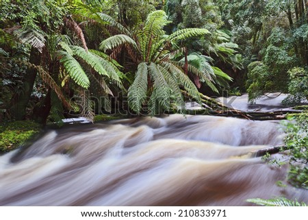 australia tasmania Nelson waterfall stream flooding after heavy rains through tropical rainforest lush green plants and fern trees - stock photo