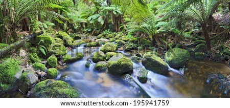 australia tasmania rainforest creek with pure blurred streaming water between boulders under lush fern and palm trees natural wilderness - stock photo