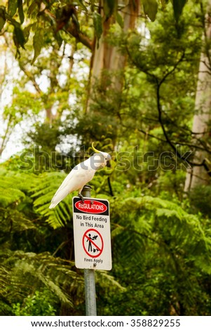 Australia. The State Of Victoria. Parrot cockatoo. The rules of conduct. - stock photo