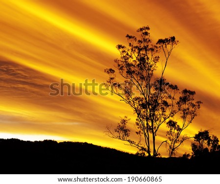 Australian autumn sunset with eucalyptus gum tree silhouette and radiatus clouds - stock photo