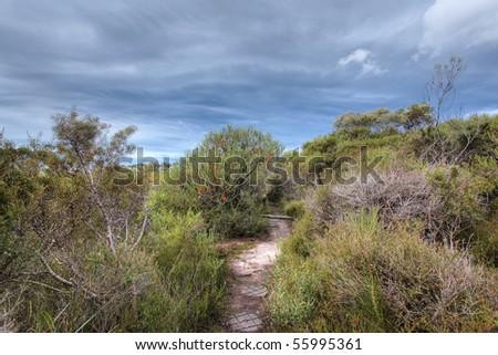 australian banksia landscape - stock photo