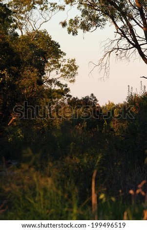 australian bush background country darling downs - stock photo