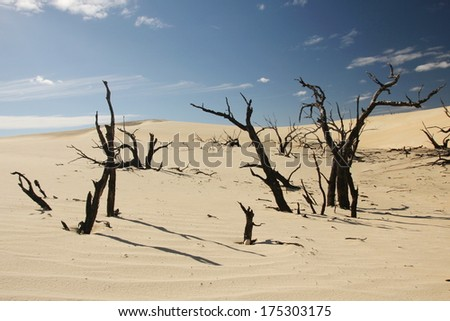 Australian Desert - stock photo