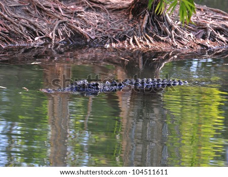 australian eustarine or saltwater crocodile submerged in billabong , cooktown, north queensland, australia - stock photo