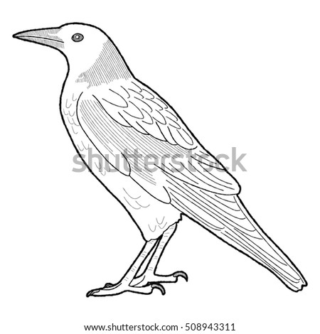 Vector Illustration Raven Isolated Black White Stock Vector