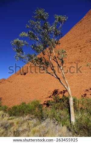 Australian Native plants and gumtree in outback national park - stock photo