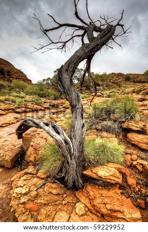 australian outback in northern territory - stock photo