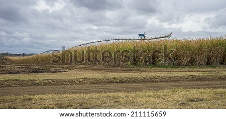 Australian primary industry, sugarcane plantation ready for farmers to harvest to produce sugar and biofuel - stock photo