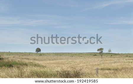 Australian rural landscape, horizon, single tree, barbed wire fence, long grass, and sky with wispy clouds - stock photo