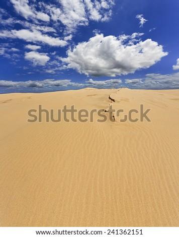 AUstralian sand dune like lifeless desert of wind eroded sand under bright blue sky on sunny summer day - stock photo