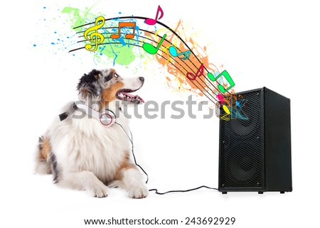 australian shepherd dog listening music, while relaxing and enjoying the sound of an speaker, isolated on white background  - stock photo