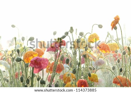 australian south east queensland tourist attraction the flowers of carnival toowoomba - stock photo