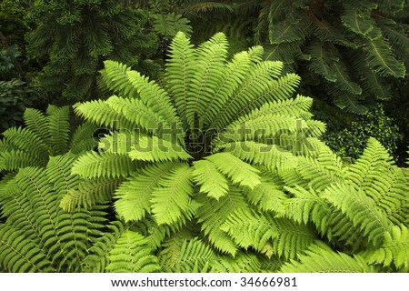 Australian Tree-fern. high angle view - stock photo