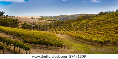 Australian Vineyard - stock photo