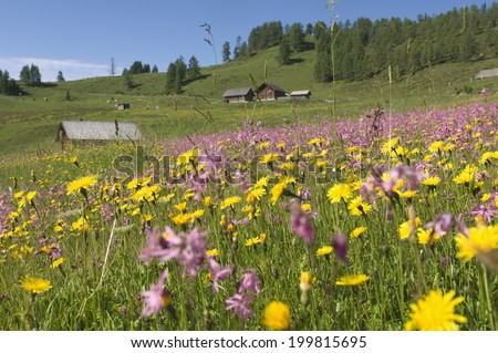 Austria, Salzburger Land, Flowering meadow - stock photo
