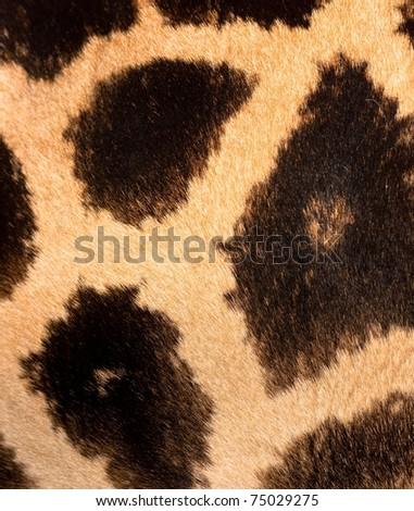 Authentic animal wool texture - stock photo
