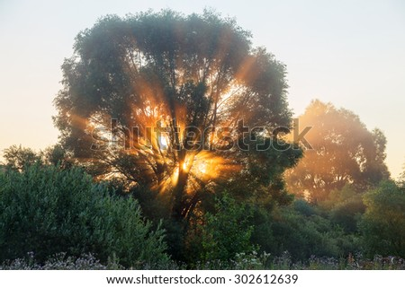 Authentic tree at dawn, filled with gentle rays of the sun in the misty morning haze. Beautiful morning landscape in backlit. - stock photo