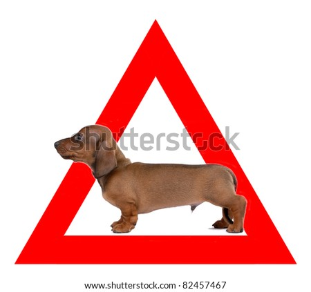 Auto sticker with Dachshund on it isolated on white - stock photo