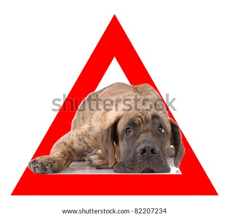 Auto sticker with german mastiff on it isolated on white - stock photo