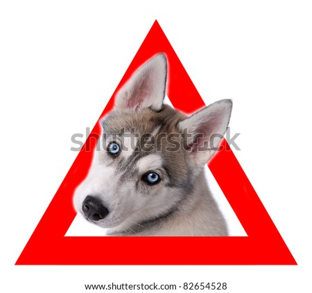Auto sticker with husky on it isolated on white - stock photo