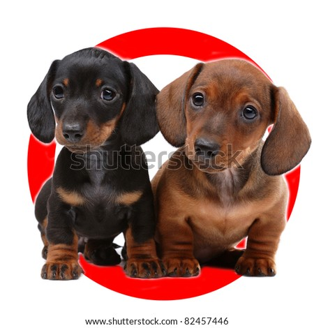 Auto sticker with pair of Dachshunds on it isolated on white - stock photo