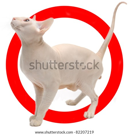 Auto sticker with peterblod cat on it isolated on white - stock photo