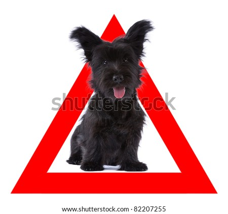 Auto sticker with skye terrier on it isolated on white - stock photo
