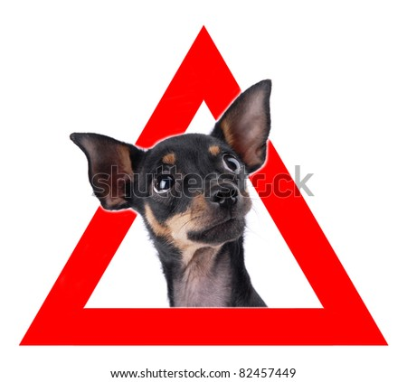 Auto sticker with toy terrier on it isolated on white - stock photo